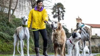A dog walker walking 5 dogs of different breeds