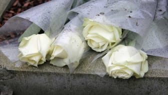 picture of four white roses