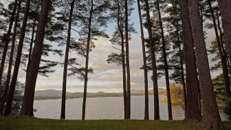 Trees on the edge of a lake