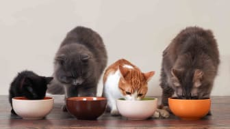 Array of four cats eating at their food bowls