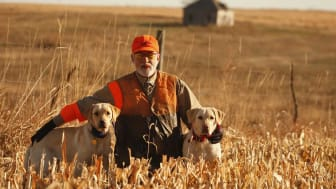 Senior man stands in a field with his two hunting dogs