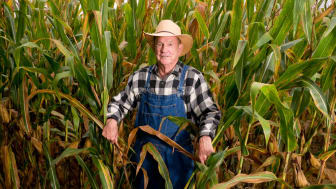Senior farmer standing in an Indiana cornfield