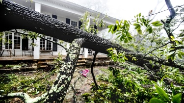 picture of tree down in front yard of a home