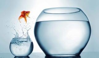 goldfish jumping to a bigger bowl
