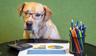 A very good dog wearing glasses and looking over his investments. He's a very good boy.