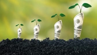 one hundred dollar bills growing out of soil