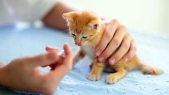A veterinarian provides a vaccine to an adorable kitten.