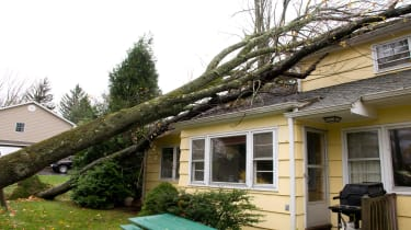 picture of tree that fell on a house