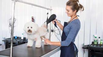 Dog at groomer