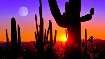 Cactus at dusk in the Arizona desert