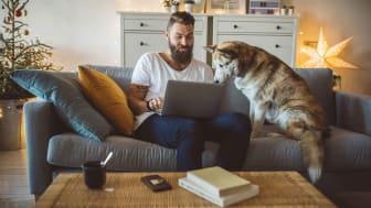 Un homme est assis sur un canapé avec son ordinateur portable pendant qu'un chien regarde