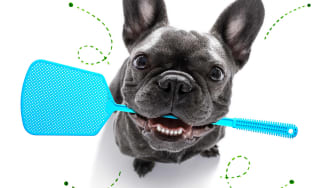 A dog holds a fly swatter in its mouth.