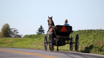 Amish man in horse and buggy