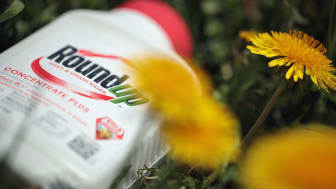 CHICAGO, ILLINOIS - MAY 14: Roundup weed killer is shown on May 14, 2019 in Chicago, Illinois. A jury yesterday ordered Monsanto, the maker of Roundup, to pay a California couple more than $2