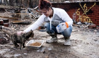 photo of woman helping cat