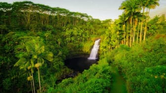 A waterfall surrounded by a tropical forest