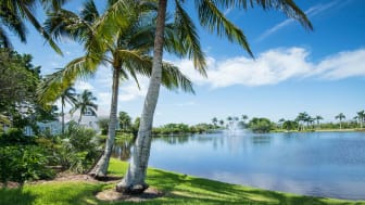 Palm trees and grass circle a Florida lake in daylight