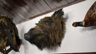 picture of animal heads on a wall