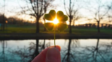 The sun shines through a four-leaf clover.