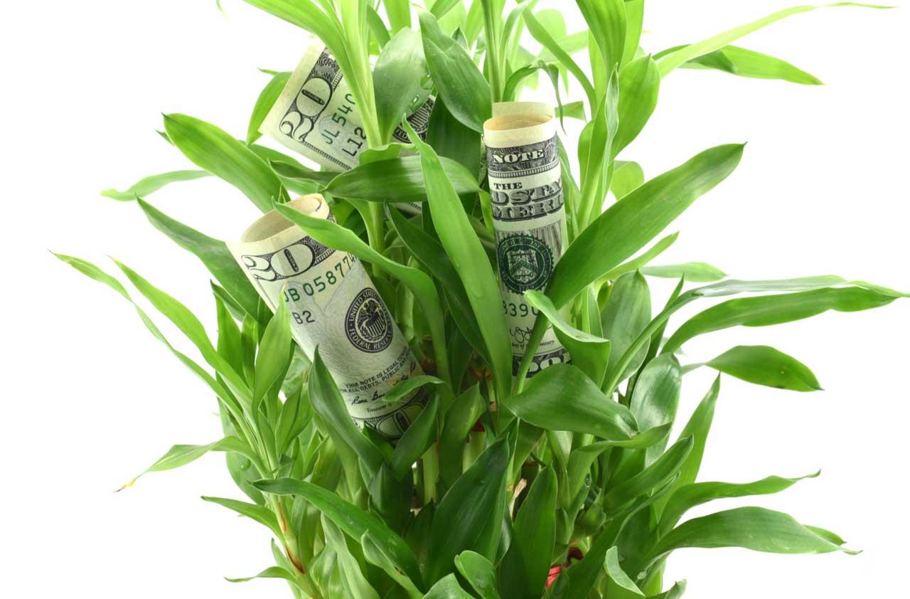 Small-Cap Dividend Stocks With Big Appeal | Kiplinger