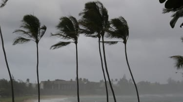 Palm trees being blown by a tropical rain storm.