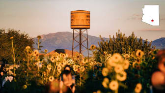 Flowers and a water tower in Marana, Ariz.