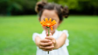 A small girl in a green field holds out a flower.