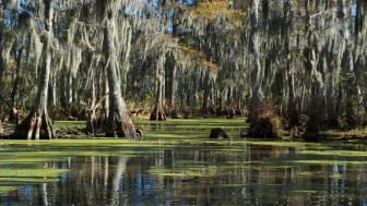 picture of bayou in Louisiana