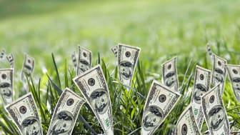 A field of dollar bills