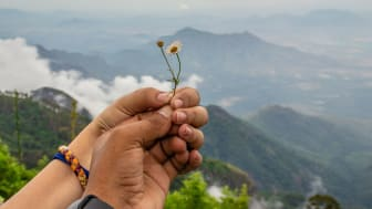 A pair of hands hold some wildflowers in front of a beautiful mountain view.