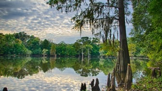 A lake in Jackson, Miss.