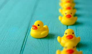 One yellow rubber duckie swims out of a row of others.