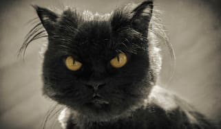 photo of a grumpy cat