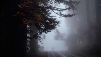 Spooky figure crosses road cutting through big woods