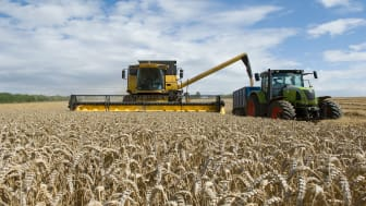 picture of wheat being harvested