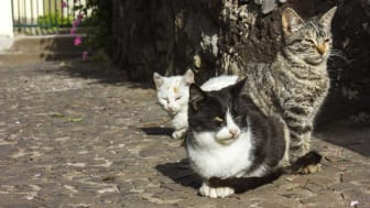 picture of three feral cats