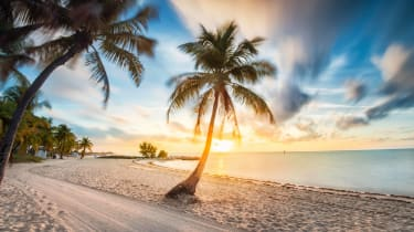 Florida beach and palm trees