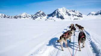 picture of Alaska dog sled