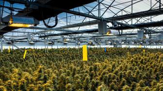 Cannabis growing facility