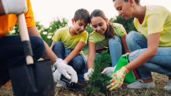 Kids work together to plant a tree.