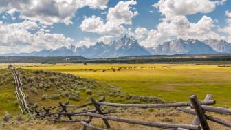 Wyoming Ranchland.A herd of cows grace peacefully behind a traditional wooden fence with the Grand Teton mountains in the background