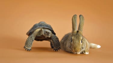 Tortoise and a hare