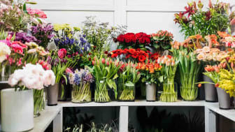 A colorful display of various plants and flowers in vases in a local florist.