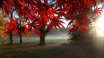 Trees with red leaves during autumn