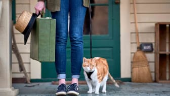 Cat on a leash standing next to owner holding luggage