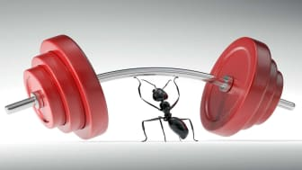ant holding up barbells