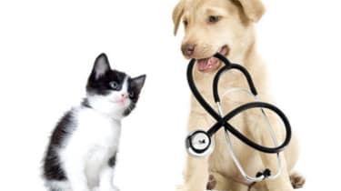 6 Things You Must Know About Pet Insurance | Kiplinger