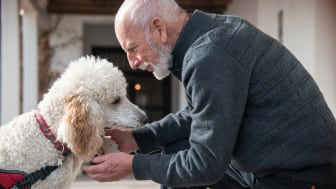 A man petting a service dog.