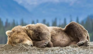A bear lies sleeping in the mountains.