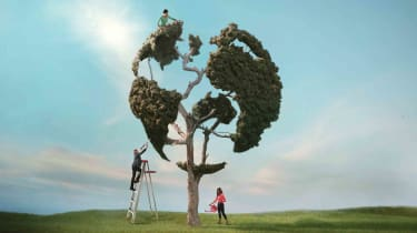 tree clipped into an earth shape